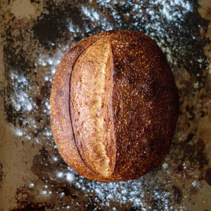 baked sourdough bread for beginners just out of the oven